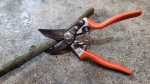 secateurs sharpen